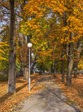 Old public park in autumn royalty free stock photos
