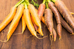 Old purple and current  orange sort of carrots Stock Images
