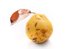 Old quince Royalty Free Stock Images