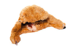 The old rabbit fur hat Royalty Free Stock Images