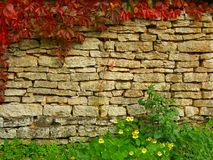 Old, ragged brick wall texture with fall greenery Stock Photo