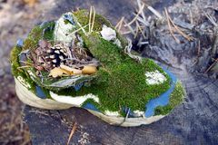 Old ragged sneaker overgrown with green moss on a dry stump Royalty Free Stock Photos