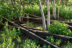 Old railroad track junction and silver birch in the High Line park in New York City royalty free stock photos