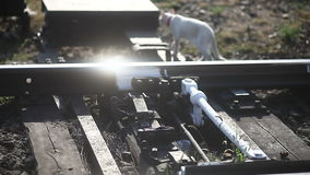 Old railroad tracks close-up Backlit sunlight cat. Old railroad tracks  close-up Backlit sunlight cat goes outdoors morning video stock video footage