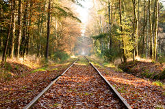 Old railroad tracks in dense hardwood forest. Old railroad tracks extending into the distance in dense hardwood forest with fallen leaves covering surface during Royalty Free Stock Image