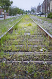 Old Railroad Tracks. Overgrown with weeds stock photography