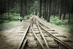 Old rails in the middle of the forest. Narrow track Royalty Free Stock Image