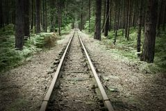 Old rails in the middle of the forest. Narrow track Royalty Free Stock Photography