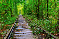 Old railway in autumn forest Stock Image