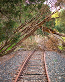Old Railway Blocked. An old railway abandoned and tress now block in line in Western Australia Stock Images