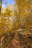 Old Railway in the Fall Forest Royalty Free Stock Photo