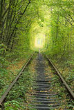 Old railway line. Nature with the help of trees has created a unique tunnel. Tunnel of love - wonderful place created by nature Royalty Free Stock Images