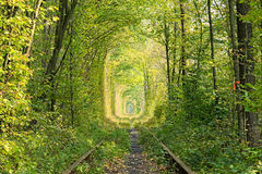 Free Old Railway Line. Nature With The Help Of Trees Has Created A Unique Tunnel. Tunnel Of Love - Wonderful Place Created By Nature Royalty Free Stock Images - 77980769
