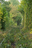 Old railway line. Railway line is overgrown with grass and small bushes. Tunnel of love - wonderful place created by nature. stock photography