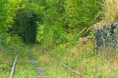 Old railway line. Tunnel of love - wonderful place created by nature royalty free stock photos