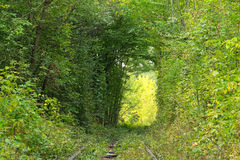 Old railway line. Tunnel of trees. Tunnel of love - wonderful place created by nature. Klevan. Rivnenska region. Ukraine royalty free stock photo