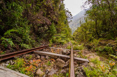 Old railway in a tropical forest. Old railroad Royalty Free Stock Images