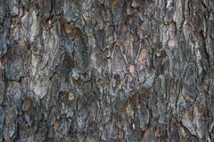Old rain tree bark texture. Background stock images