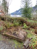 Old Raised Snoqualmie Garden Plot in Disarray. Old raised garden plot during winter, with broken down container plots, cabbage, berries, trees, clouds and stock images
