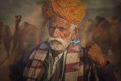 Old Rajasthani man against the background of his camels. Portrait indian man attended the annual Pushkar Camel Mela Stock Image