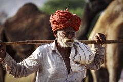 Old Rajasthani man against the background of his camels. Portrait indian man attended the annual Pushkar Camel Mela Royalty Free Stock Photo