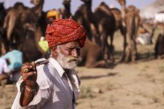 Old Rajasthani man against the background of his camels. Portrait indian man attended the annual Pushkar Camel Mela Royalty Free Stock Images