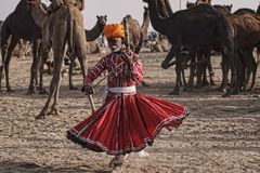 Old Rajasthani man dances against the background of his camels stock photography