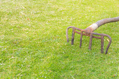 Old rake on the grass Stock Images