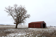 Old Red Barn and Bare Tree in Winter in Illinois Stock Images