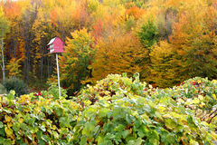 Old Red Barn Bird House in Autumn Foliage Royalty Free Stock Photos