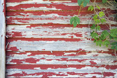 Old Red Barn with Peeling Paint and Vines. Old Red Barn with Peeling Paint on Wood Siding and Climbing Vines Grunge Background stock photography
