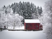 Old Red Barn on Snowy Hill. Snow covered hillside with old red barn and stand of Pine trees behind Stock Image