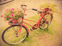 Old red bicycle with flower pottery Stock Photo