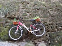 Old red bicycle hanging on a stone wall. Old red bicycle with decorative potted plants hanging on a grungy moss covered stone wall outdoors in a garden Stock Photo
