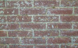 Old red brick background Stock Image