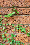 Old red brick wal Royalty Free Stock Photography