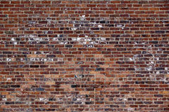 The old red brick wall Stock Images
