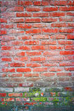 Old red brick wall backgrounds with spot of lichen or moss Royalty Free Stock Photography