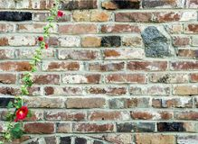 Old red brick wall with granite stones and blooming mallow, vint. Old red brick wall with granite stones insertion and blooming mallow, vintage worn masonry Stock Photo
