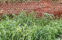 Old red brick wall and grass Royalty Free Stock Photography