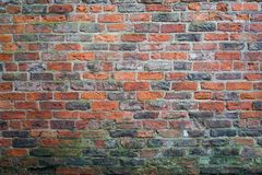Old red brick wall with green fungus on the bottom Stock Photos