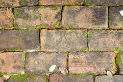 Old red brick wall grown with grass and moss Royalty Free Stock Images
