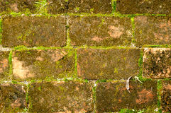 Old red brick wall grown with grass and moss Stock Images