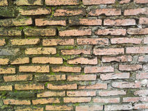 Old red brick wall grown with grass and moss Royalty Free Stock Photography