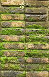 Old red brick wall grown with grass and moss Stock Photo