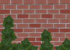 Old red brick wall with ivy climbing up Stock Images
