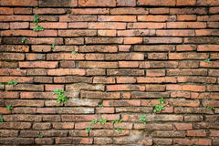 Old red brick wall texture background. At Ayuttaya Thailand Stock Photography