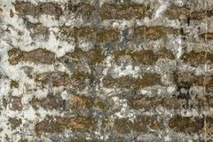 Old red brick wall with thick layers of light white cement, stains of dirt, mold and green moss. rough texture. rough surface. stock images