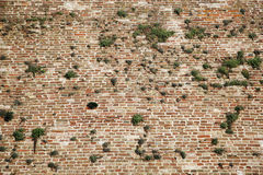 Old red brick wall with vegetation green grass. Vintage Old red brick wall with vegetation green grass copy space royalty free stock image