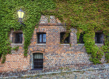 Old red brick wall with wild grapes Stock Photos